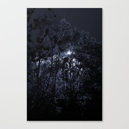 Trees In The Night Light Canvas Print