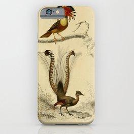 D'Orbigny - Universal Dictionary of Natural History; Birds (1849): 2 Flycatcher & Lyre Bird iPhone Case