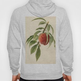 Vintage Illustration of a Peach Branch Hoody