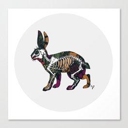 Anatomy of a Bunny Canvas Print