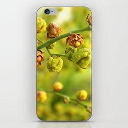 Foliage background iPhone Skin