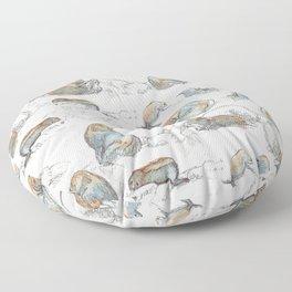 sketch of New zealand seals Floor Pillow