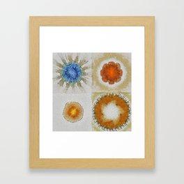 Lochometritis Being Flower  ID:16165-014048-97820 Framed Art Print