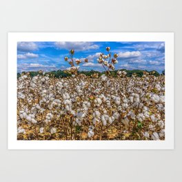 Sea of Cotton Art Print