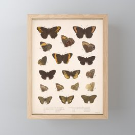 Vintage Scientific Hand Drawn Illustration Anatomy Of Butterfly Insect Patterns Biology Art Framed Mini Art Print