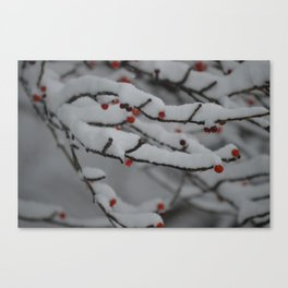 Red Berries and Snow Canvas Print