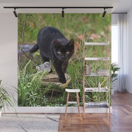 Lovely black cat walking her garden Wall Mural