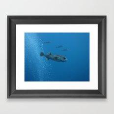 Porcupine fish balloons Framed Art Print