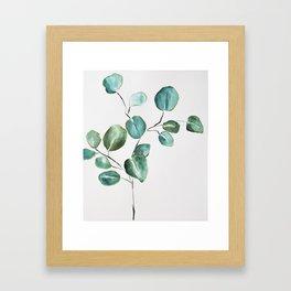 Eucalyptus leaves, illustration, botanical Framed Art Print