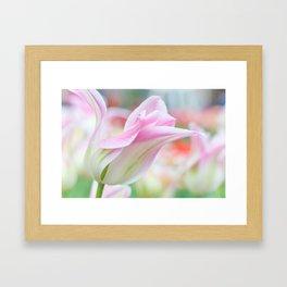 Emollient Lightness. Tulips of Keukenhof Framed Art Print