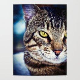 Bengal Tom Tabby Cat Portrait Poster