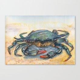 Chesapeake Blue Crab Canvas Print