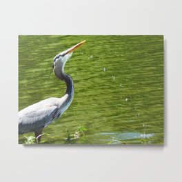 Water Heron Metal Print