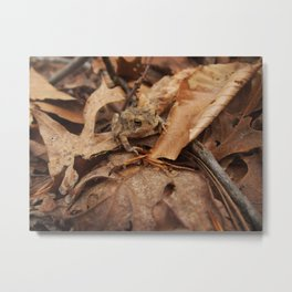 Make Like a Toad and Leaf Metal Print