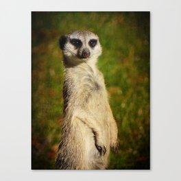 I am a model - a meerkat Canvas Print