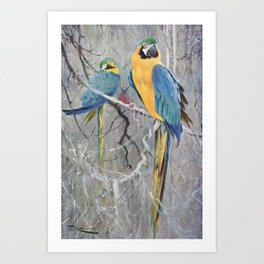 Kuhnert, Friedrich Wilhelm (1865-1926) - Wild Life of the World 1916 v.2 (Blue Macaw) Art Print