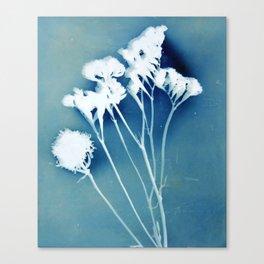 Blue Strawflower Canvas Print