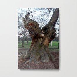 Sweet Chestnut Tree Metal Print