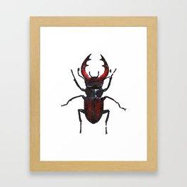 Stag beetle watercolor Framed Art Print