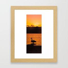 Swan Sunset on the Griffin Framed Art Print