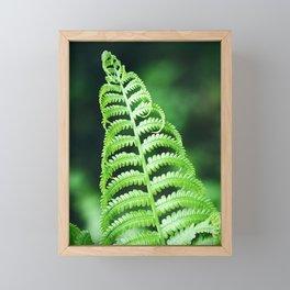 Fern 15 Framed Mini Art Print