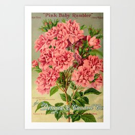 Our New Guide to Rose Culture 1895-1908 - Pink Baby Rambler Art Print
