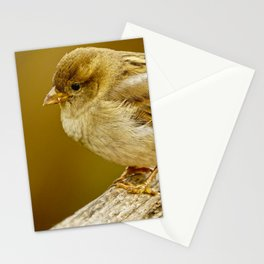 Sparrow close-up Stationery Cards