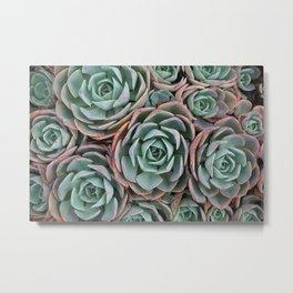 Pink & Green Succulent Garden Metal Print