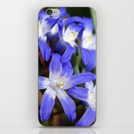 Early Spring Blue - Chionodoxa iPhone Skin