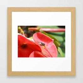 Fly on flower Framed Art Print