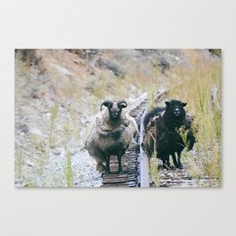 Rouge Sheep Canvas Print