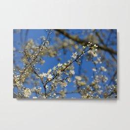 Spring is coming! Metal Print