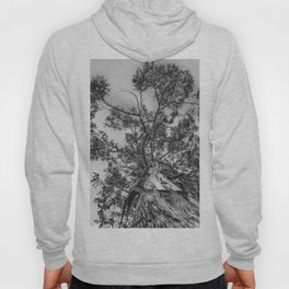 The old eucalyptus tree Hoody