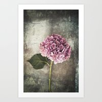 hydrangea Art Prints featuring Hydrangea  by Maria Heyens