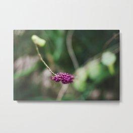 Wild Berries II Metal Print