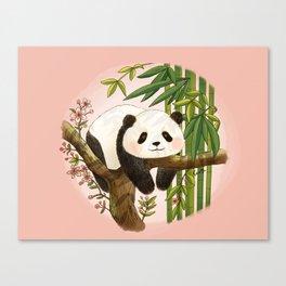 Panda under sunlight - Pink Canvas Print