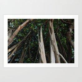 Banyan tree canopy Art Print
