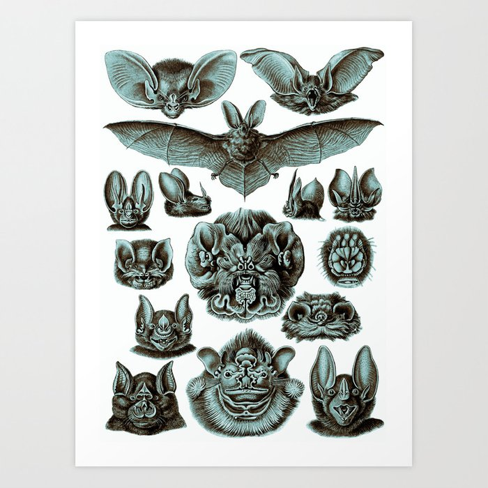 Vintage Illustration by Haeckel Bats Poster Bats Print Bats Wall Art