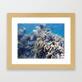 San Sal Framed Art Print