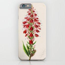 Flower lobelia venenata4 iPhone Case