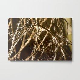 Cotton Web Metal Print