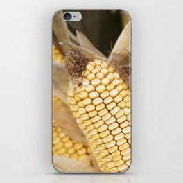 cobs and corn in the farm iPhone Skin