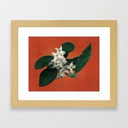 Invasive Species Series: Autumn Olive Framed Art Print
