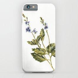 Veronica chamaedrys iPhone Case