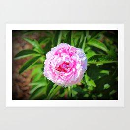 Big Pink Bloom Art Print