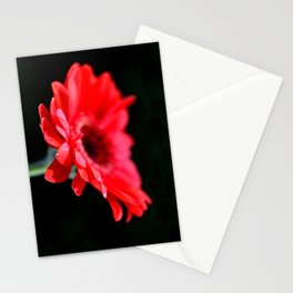 Red Gerbera Daisies  Stationery Cards