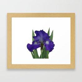 Stellar Lights, Deep blue-violet Iris Framed Art Print
