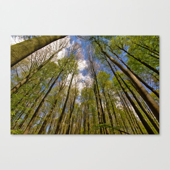looking up to the trees in the forest Canvas Print