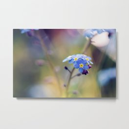 Forget-Me-Not Blue Floral Metal Print
