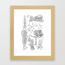 A Compilation – Cephalopods Framed Art Print